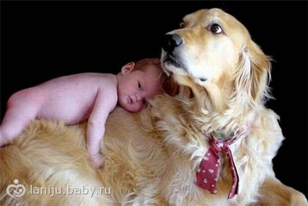 Лучшая порода собаки для детей