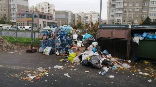 «Нам не нужна свалка под окнами»: жители Калининграда выступили против установки контейнеров