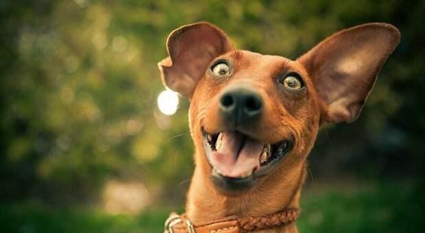 """4. """"Когда у него игривый настрой, за ним нужно бегать, выкрикивая его кличку и хлопая в ладоши, пока он носится по дому как демон. Хлопки - обязательное условие,"""" — FabulousPainting животные, забавно, забавные животные, истории, питомцы, подборка, собаки, хозяева"""
