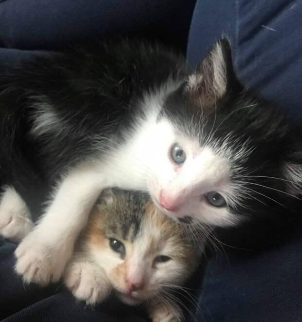 Малыш Беннет и его любимая сестренка история, история спасения, котята, кошка, кошки, спасение животных, трогательно