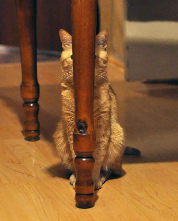 35 котов, которые в совершенстве овладели искусством ниндзя