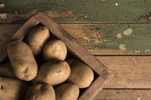 3 простых шага: Как я вырастил картофель больше чем у соседа