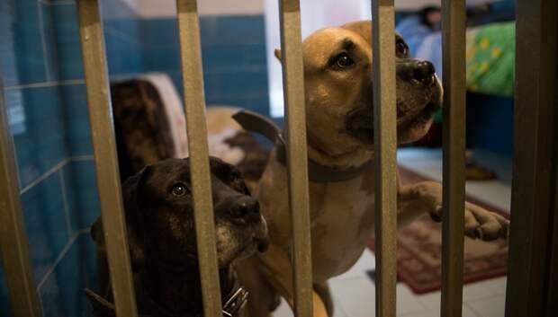 176,7 млн руб выделят в Подмосковье на мероприятия по обращению с бездомными животными