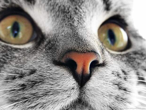 14. домашние животные, животные, коты, кошки, морда, нос, носики, фото кошек