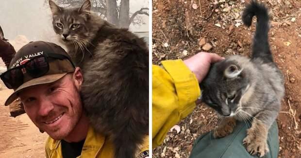 Райан Коулман и его мурчащий друг друзья на век, калифорния, коты, пожары, спасение