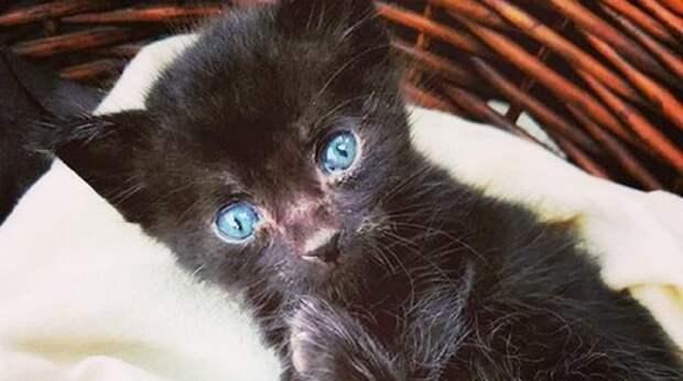 «Если выживешь, оставлю тебя навсегда в своем доме!» — думала женщина, глядя на котенка. И тот стал идти на поправку
