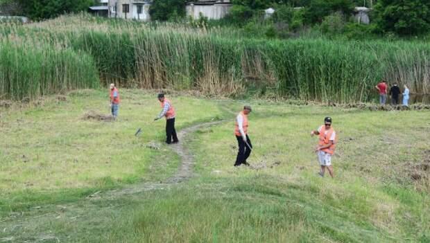 Тридцать три гектара: в Симферополе выкосят траву и камыш