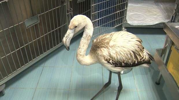 В зоопитомнике волгоградского мужского монастыря поселился залетный фламинго