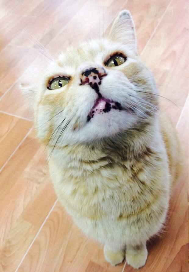 2. домашние животные, животные, коты, кошки, морда, нос, носики, фото кошек