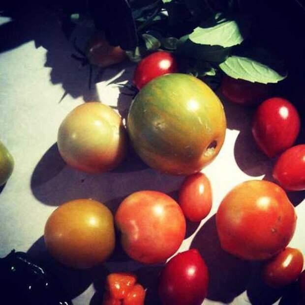 1. Хотите вырастить сладкие помидоры? Используйте пищевую соду сад, советы, хитрость