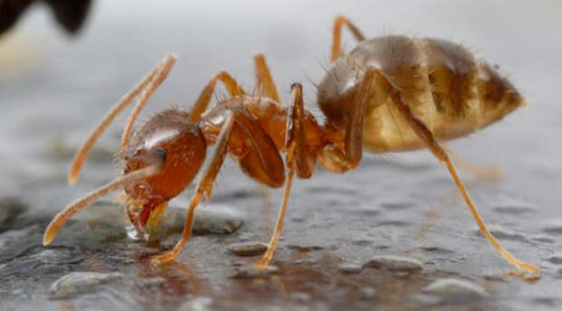 12 самых опасных насекомых на планете