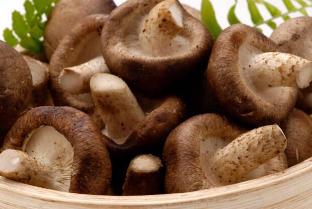 Фунготерапия в лечении патологических состояний. Лечение онкологии при помощи грибов. Плюсы и минусы.
