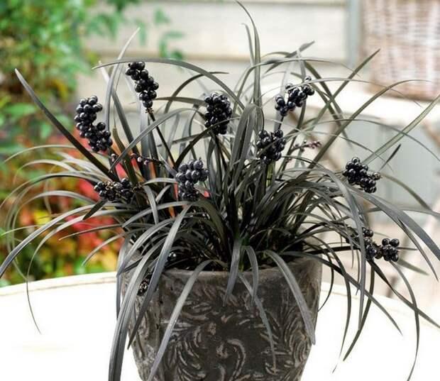 комнатные растения увлажняющие воздух