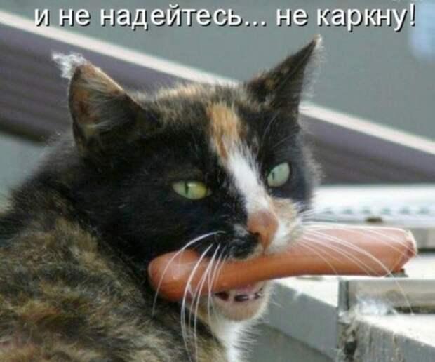 Субботний котопост забавные фото с котами., кошки, приколы с котами, смешные коты