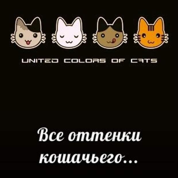 Санкт-Петербург!!! Приглашаем на выставку-пристройство котов и кошек «Осенние коты»!