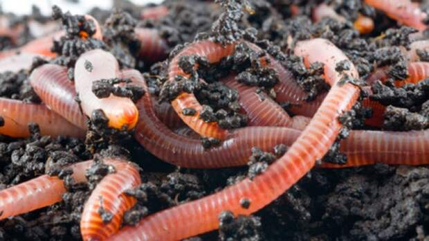 Как превратить скошенную траву в компост или мульчу