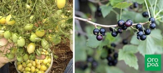 Личный опыт: 10 советов начинающим огородникам