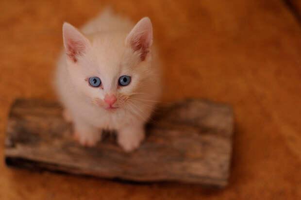 «Я покормил вашего кота и зашил ему лапу!» — бедняк отдал последние копейки. И не зря!