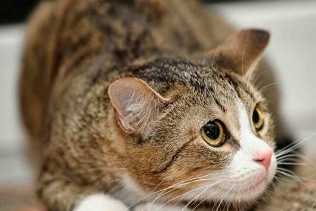 Стресс у кошки: причины и первая помощь