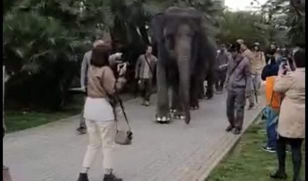 Вопрос дня - от зоозащитников: зачем в 21 веке водить слонов по улицам?