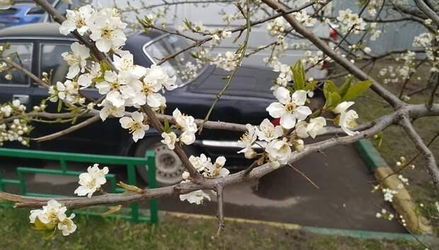 Предстоящий четверг может стать самым холодным днем мая в Московском регионе