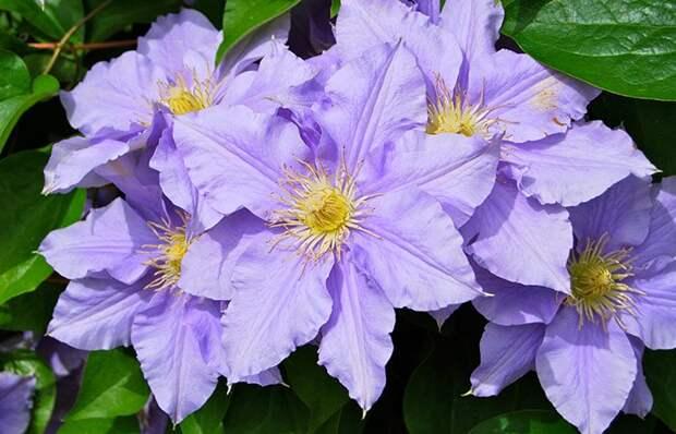 Многолетние растения, которые цветут все лето