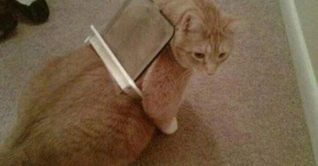 Кажется кто-то слишком много ест животные, забавно, кот, коты, кошка, подборка, прикол, юмор