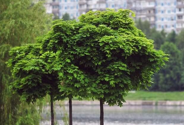 Собянин: Осенью в Москве высадят около 400 тысяч деревьев и кустарников. Фото: mos.ru
