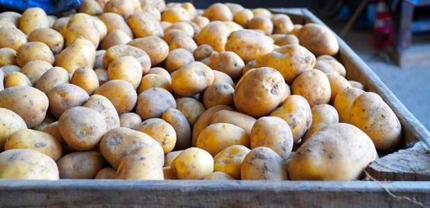 Россиянам следует приготовиться к подорожанию картофеля