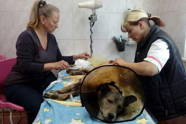 Очищать от гудрона собак помогали грумеры. Фото: АЗНО Шанс.