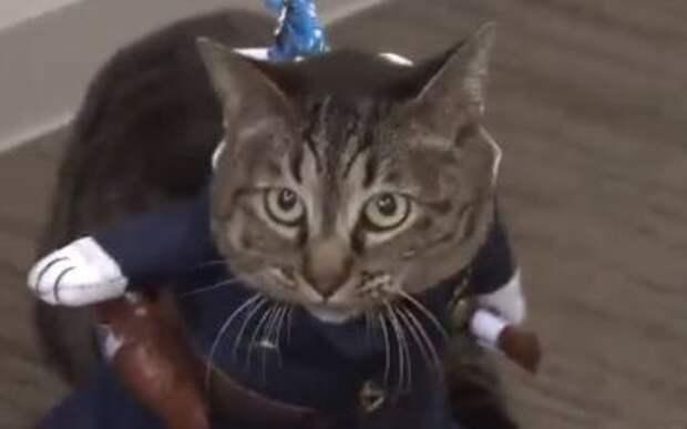 В Японии кошка после спасения человека стала начальником полиции
