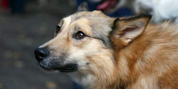 Сбежавшая за новогодними «вкусняшками» собака вернулась домой