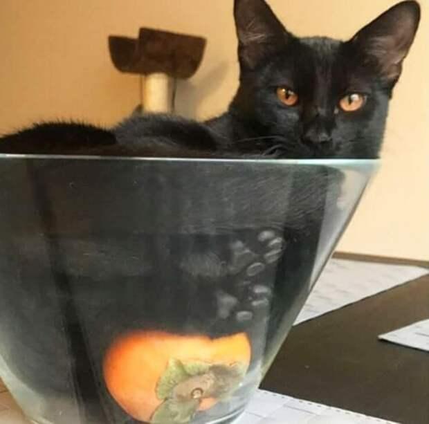 кошка в вазе