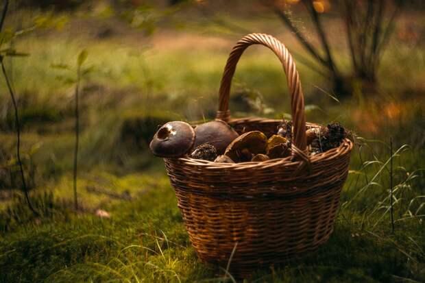 Сбор грибов и ягод в лесу может обернуться штрафом