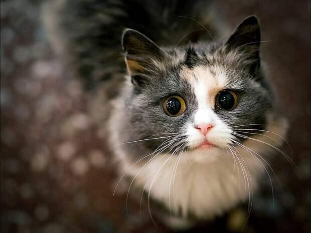 20. Кошка всегда рада доброму слову. жены, интересное, кошки, юмор