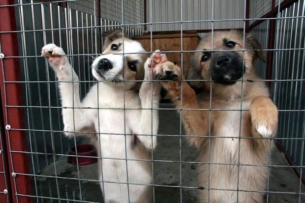 Помощь бездомным животным: 5 реальных способов улучшить их жизнь!