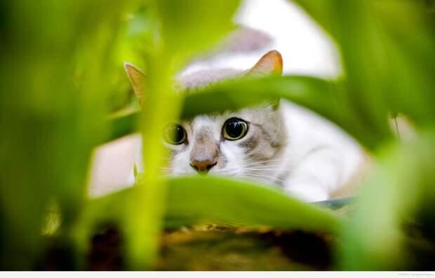 про девять жизней кошек