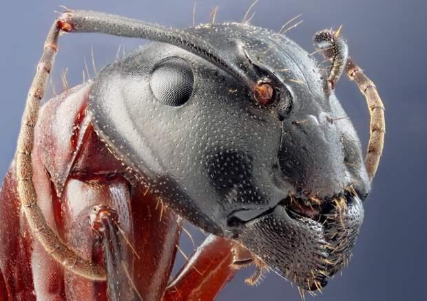 insects16 Портреты насекомых