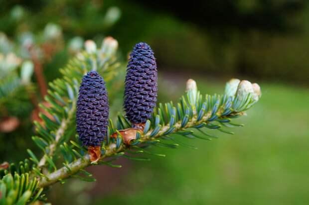 Ещё два дерева посадили в Свиблове в рамках акции «Ёлка в каждый двор»
