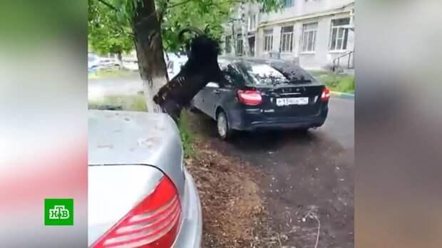 Распоясавшиеся козлы терроризируют нижегородцев