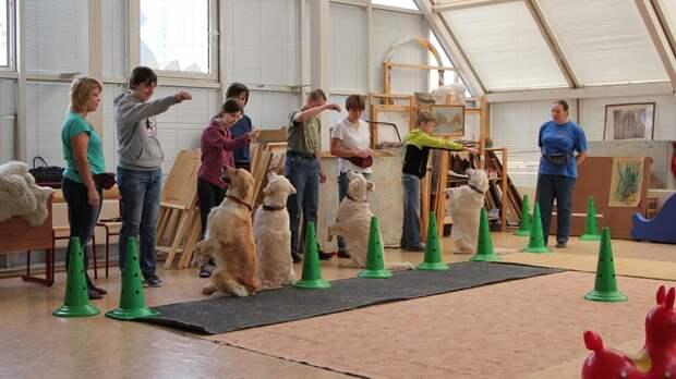 «Солнечный пес»: как собаки помогают особенным детям