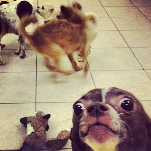 Если бы собаки умели делать селфи, они были бы именно такими в кадре, главные герои, животные, забавно, смешно, фото, юмор