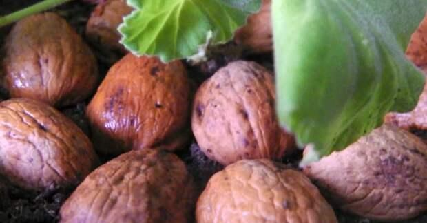 Как использовать ореховую скорлупу для растений