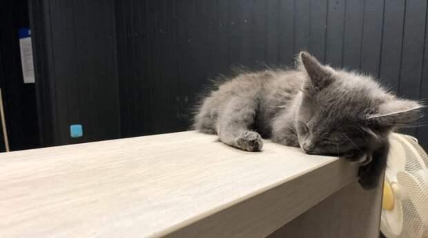 Невесть откуда в подъезде появилась коробка с котятами, а жильцы их пожалели