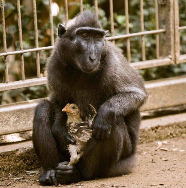 Животные дружат между собой, невзирая ни на что