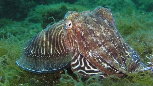 Испанские ученые впервые засняли на камеру процесс охоты гигантского кальмара