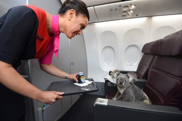 14. Полет первым классом борт, животные, пассажир, перелет, полет, самолет, фото