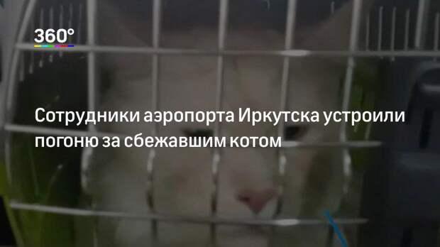 Сотрудники аэропорта Иркутска устроили погоню за сбежавшим котом