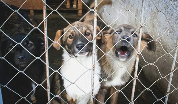 Шесть приютов для бездомных собак появятся вСвердловской области