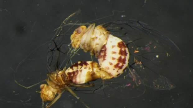 17 мерзких и немного пугающих фактов о размножении животных